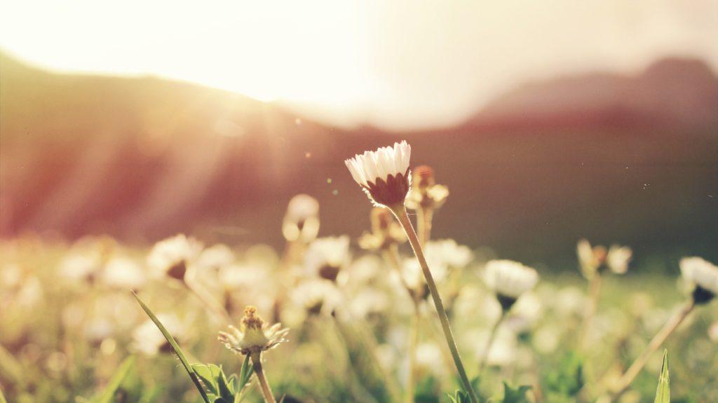 le renouveau de la vie au printemps